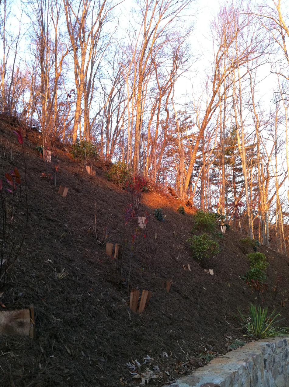 LANDSCAPE-DESIGN-STEEP-SLOPE-STABILIZATION-72dpi